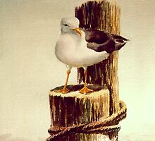 LONE SEAGULL on PILING by SHARON SHARPE by sharonsharpe