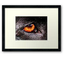 DOG EYE VISION Framed Print