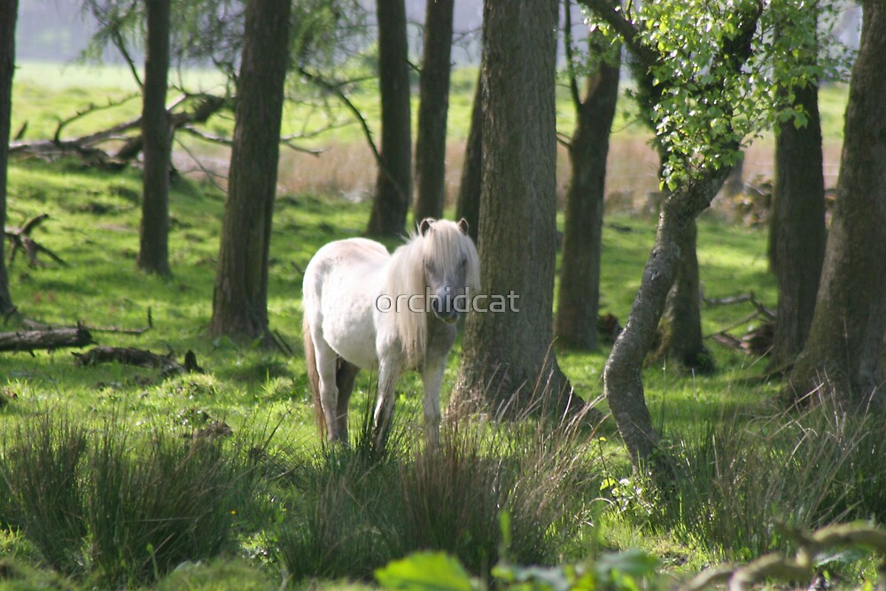 Shetland pony in the wood by orchidcat