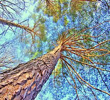 Heavenly Canopy by duroo