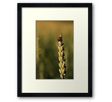Grain And The Lady Framed Print