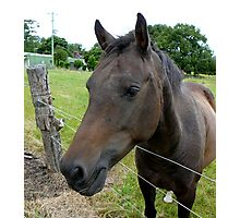 AN OLD COUNTRY MARE .... SO CURIOUS & FRIENDLY Photographic Print