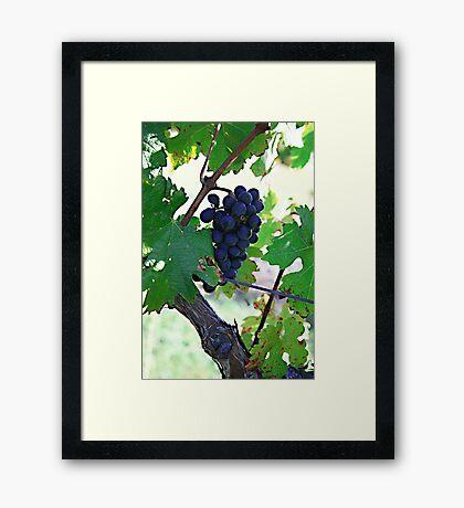 Cedar Creek Vines Framed Print