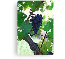 Cedar Creek Vines Canvas Print