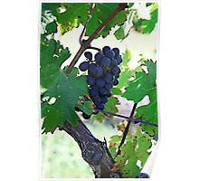 Cedar Creek Vines Poster