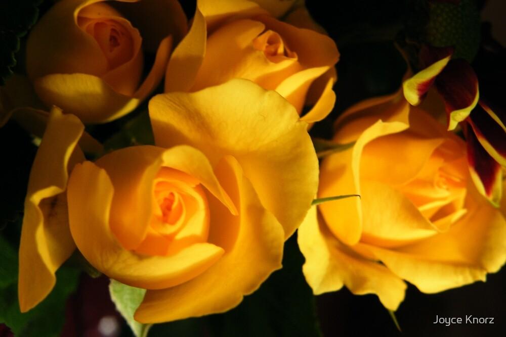 yellow rosebuds by Joyce Knorz