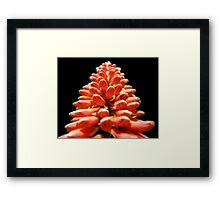 Red and hot... Framed Print
