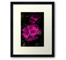 A Vivid Succulent Bouquet in Bold Pink and Fuchsia Framed Print