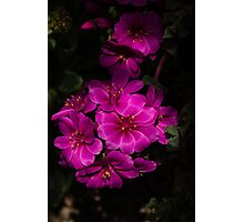 A Vivid Succulent Bouquet in Bold Pink and Fuchsia Photographic Print