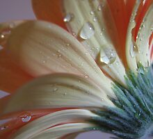 Passionate Peach II by Kathie Nichols