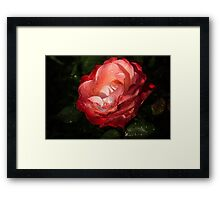 Chiaroscuro Rose – A Gift From My Mother's Garden Framed Print