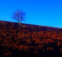 1 Tree Hill 2 by Karen Harding