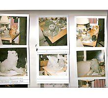 pomeranian sculptures Photographic Print