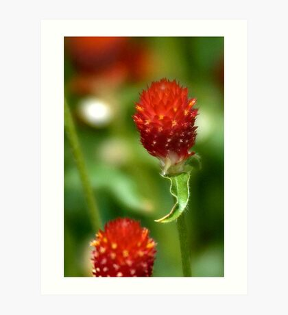 Red in the Greens Art Print