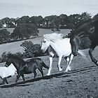 Horses at Play by Mike Paget