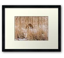 Red Fox Hunting Framed Print