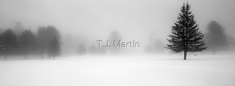 Bridgton Highlands - Trees In Fog and Snow by T.J. Martin