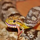 A Corn Snake Eating A Mouse With Tail Sticking Out by Joel Kempson