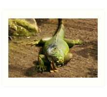 Iguana Lazying Around At The Butterfly Farm Art Print
