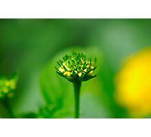 Macro - Pollen Producing Flower Head Photographic Print