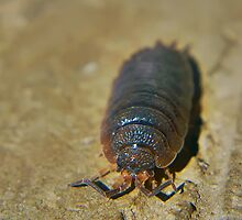 Macro Of A Woodlouse by Joel Kempson