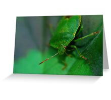 Macro - Leaf Bug Greeting Card