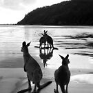 Kangaroos at Sunrise by Victoria Ashman