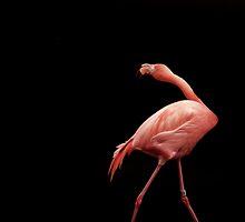 Flamingo Dance by Jamie Lee