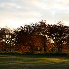 red trees by Iani