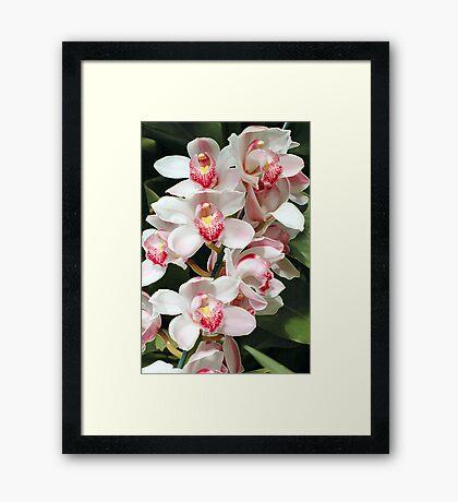 Lovely Casade Framed Print