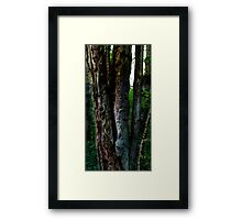 HDR Composite - Dead Tree and Lichen in Sunlight Framed Print