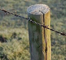 frosty post by westie71