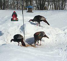 Wild turkeys  by smobou