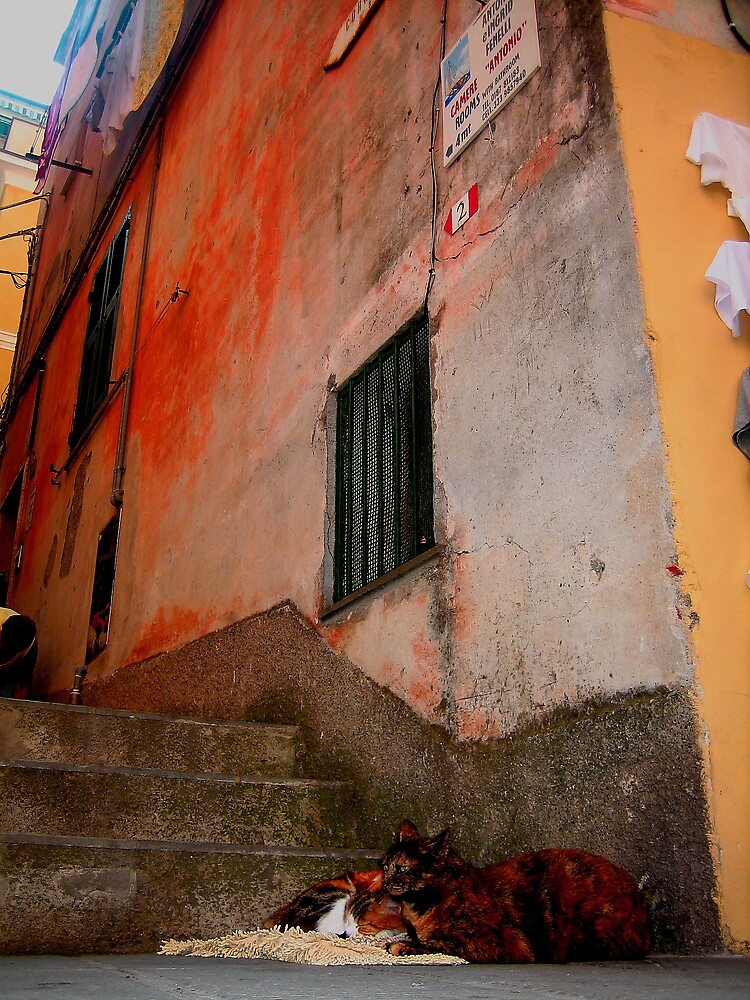 cats of vernazza by weesha