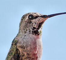Portrait Of A Hummingbird by BluAlien