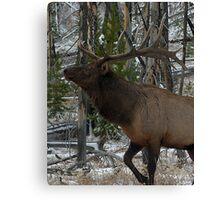 Bull Elk Canvas Print
