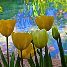 Tulips and Pond by John Butler