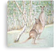 Australian Kangaroos Canvas Print