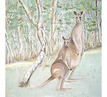 Australian Kangaroos Photographic Print