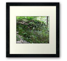 HDR Composite - Ferns on Mossy Rock 2 Framed Print