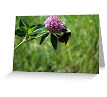 Fuzzy Bumble Greeting Card