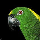 AMAZON PARROT (SCRATCHBOARD) by Leigh Karchner