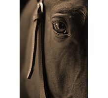 Tender Look in Sepia Photographic Print