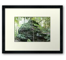 HDR Composite - Ferns Tree and Roots on Mossy Rock Framed Print
