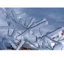Fallen Snowy Branch Photographic Print