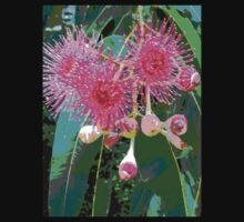Pink flowering gum blossom by Virginia McGowan