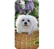 Snowdrop the Maltese - Hide & Seek iPhone Case/Skin
