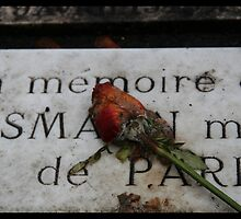 rose memory by pelagus