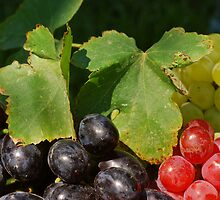 Grape Leaves by Karin  Hildebrand Lau