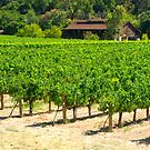 Napa Valley Vineyard by Karin  Hildebrand Lau